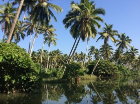 The Backwaters in Poovar