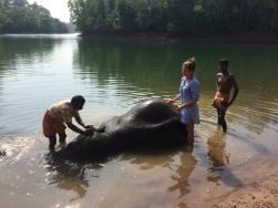 Elephant Rehab Center