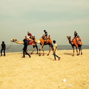 Camel riding at Allepey beach